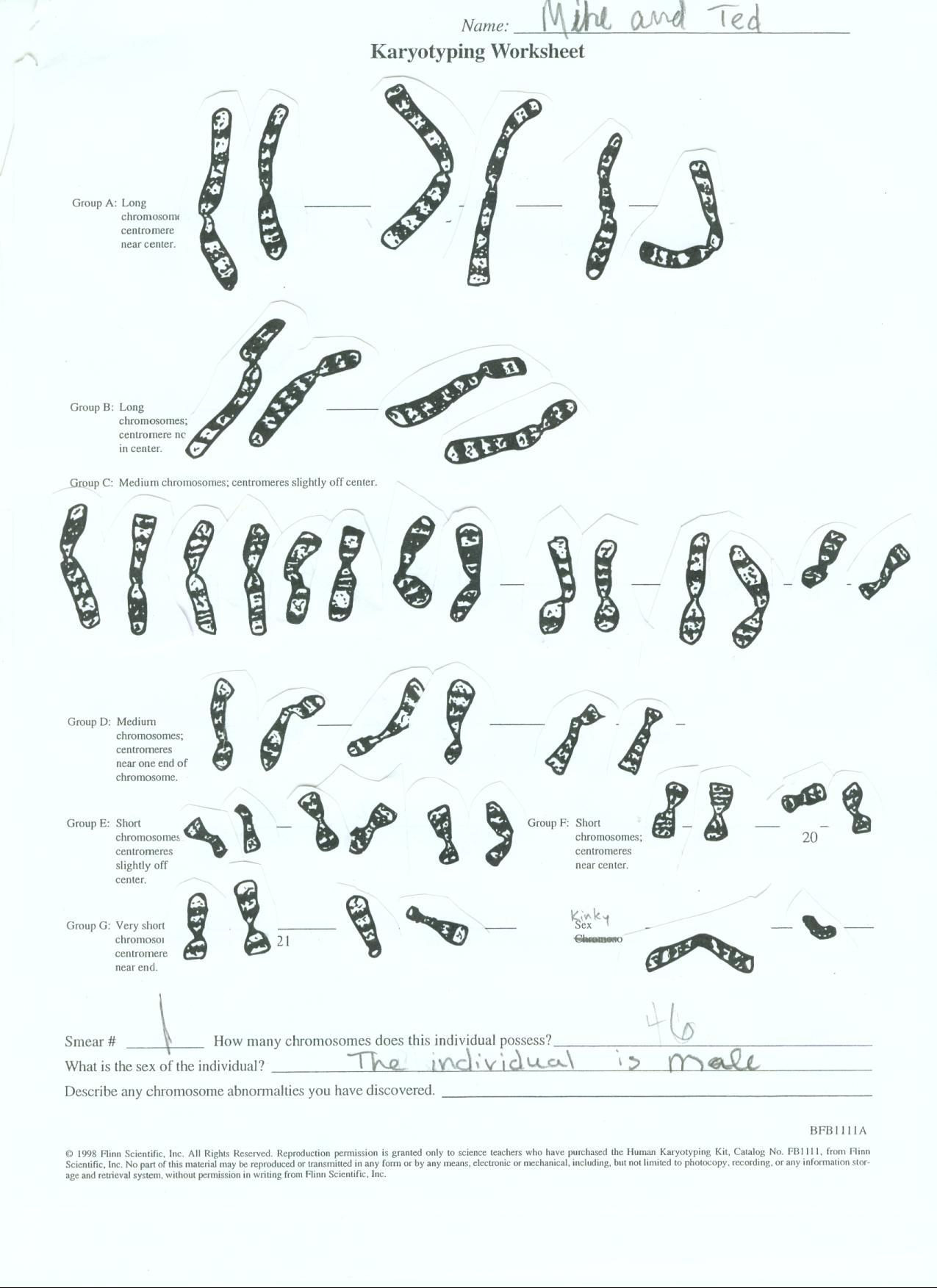 mmapbio2010public Karyotype Worksheet – Karyotypes Worksheet